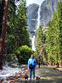 Yosemite Falls in Yosemite NP with Roscoe, Harpo and Phyllis.