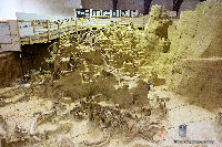 Mammoth Site and Indoor Dig